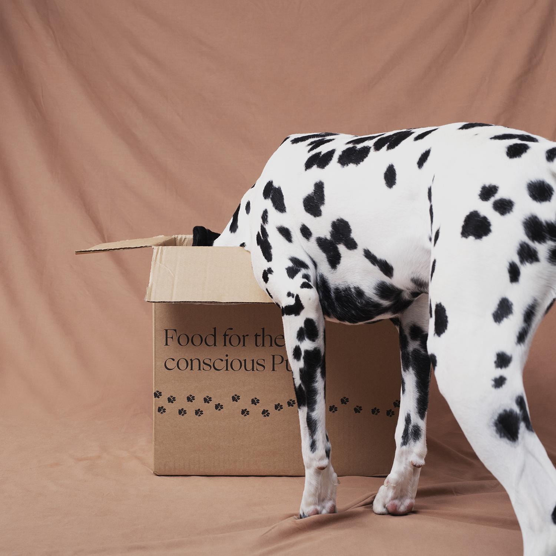 Koiran Hiilijalanjälki