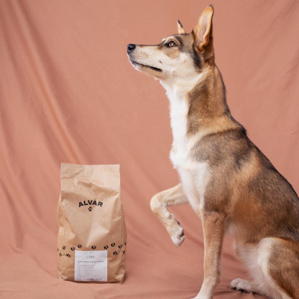 Sekarotuisen koiran ruokinta. Koiran ruokinta