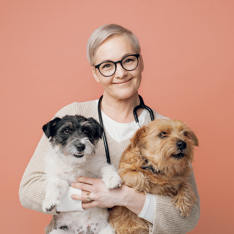 Alvarin eläinlääkäri Henna Söderholm sekä terrieripojat Pluto ja Teddy