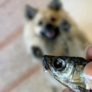 Koirannami, kuivattu muikunpää